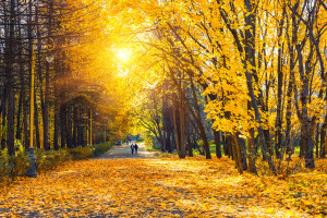 Colorful autumn park at sunny day
